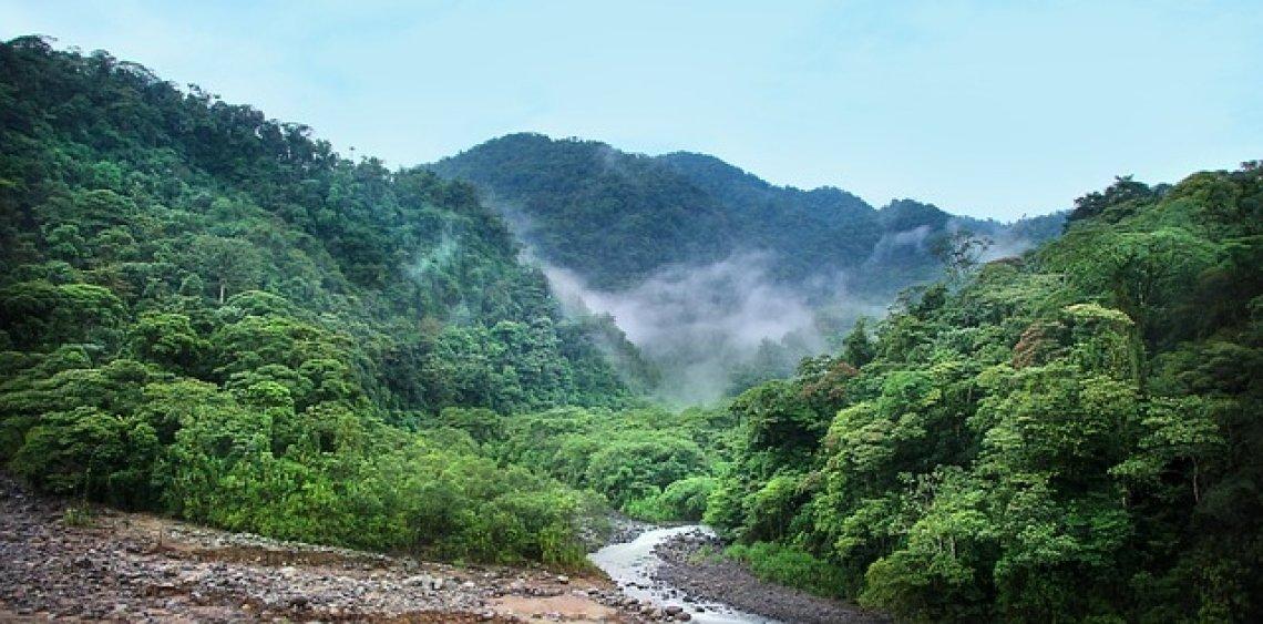 Ekologie a životní prostředí v každodenním životě - džungle
