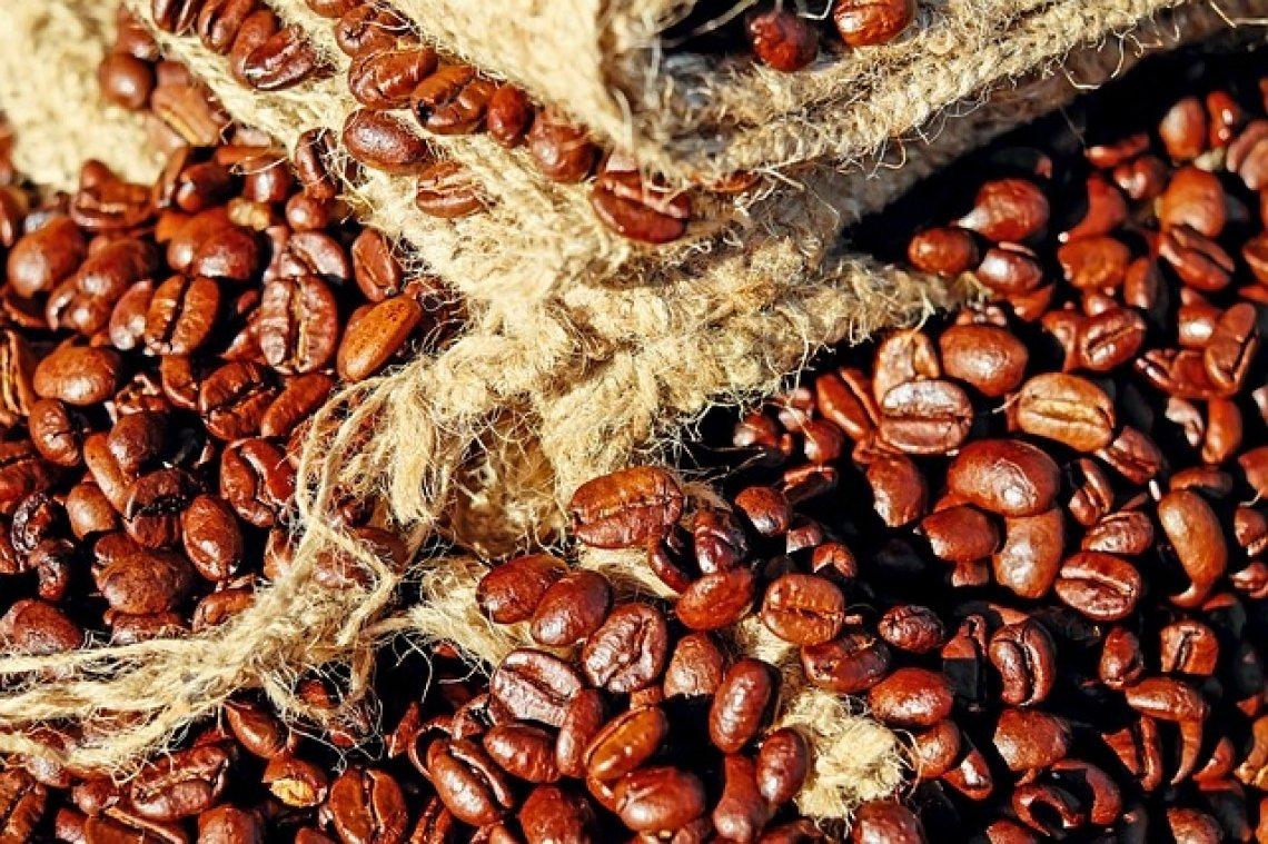 Cibetková káva - zrnka kávy, kvalitní káva