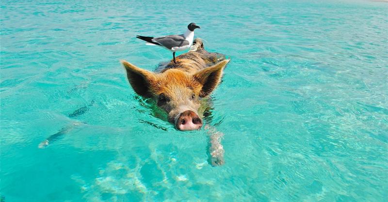 Dovolená: Kam se jet za mořem v létě a kam v zimě?