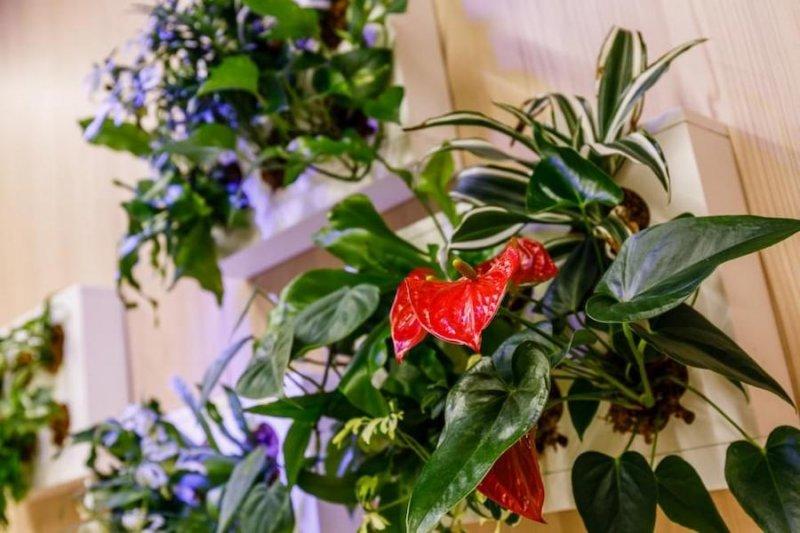 capexus, zelená kancelář, rostliny
