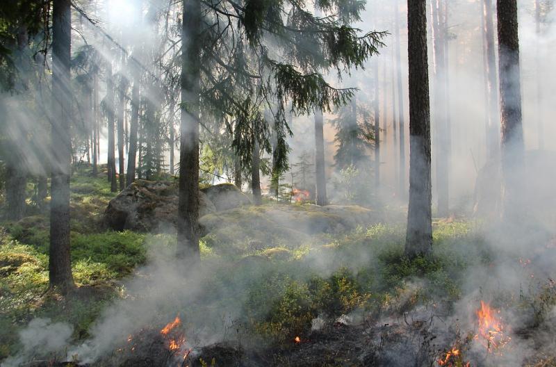Letní požáry