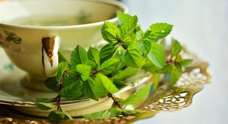 Rýmovník použití, rýmovník čaj, čaj z rýmovníku